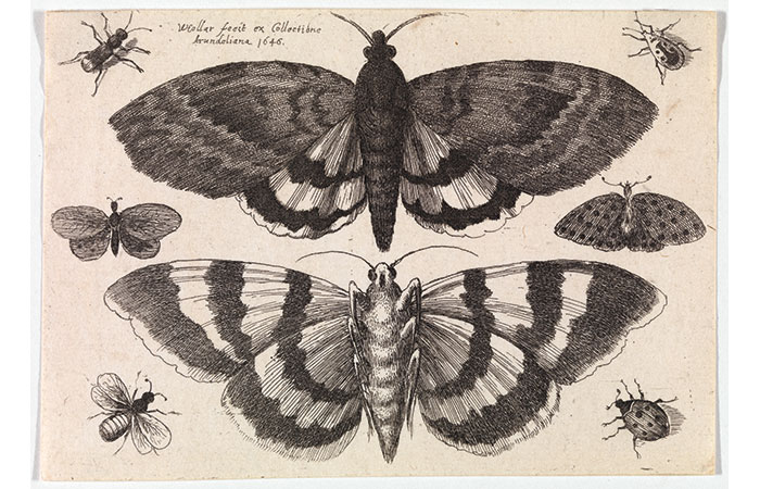 Hollar's Encyclopedic Eye: Prints from the Frank Raysor Collection