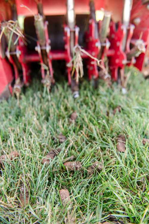 Why and when should I aerate, compost, and reseed my lawn?