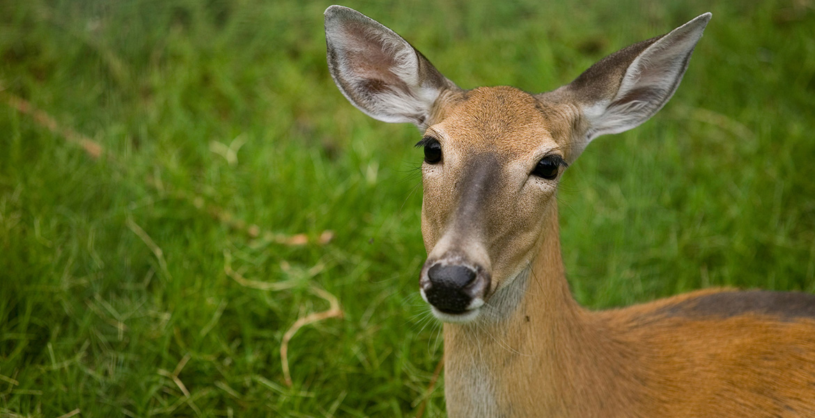 Public meeting on Chronic Wasting Disease set for Culpeper