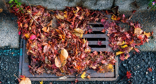 Proper disposal of leaves will keep your storm drains clear