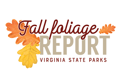 Fall foliage report for Virginia State Parks